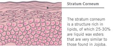 Чувствителна кожа на тялото